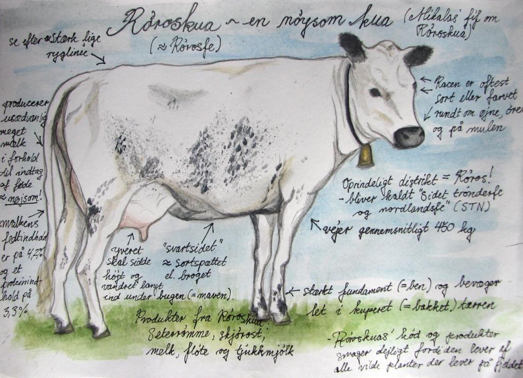 Johanne V.s tegning af Røros-kua